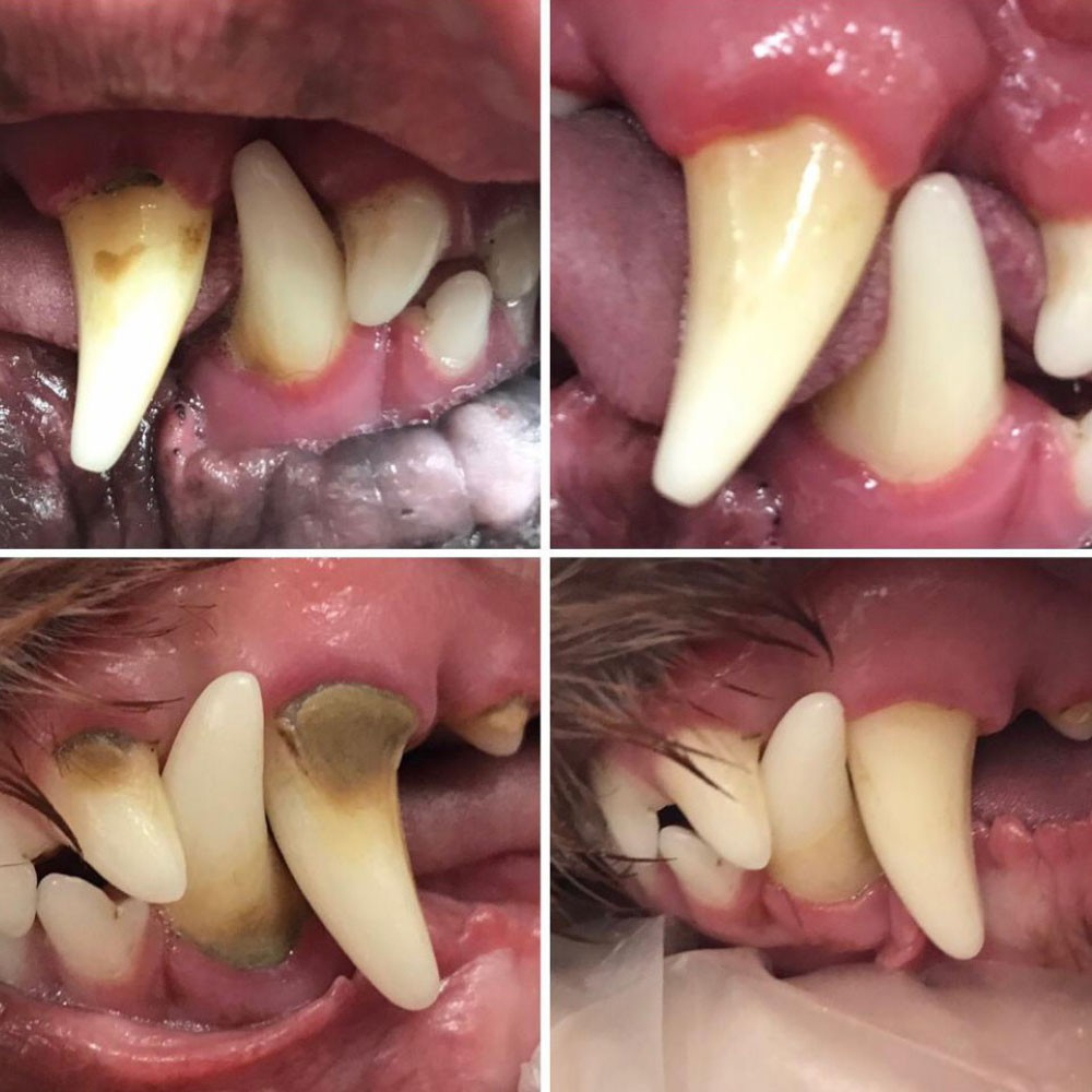 Removal of tartar and inflammation (before and after)