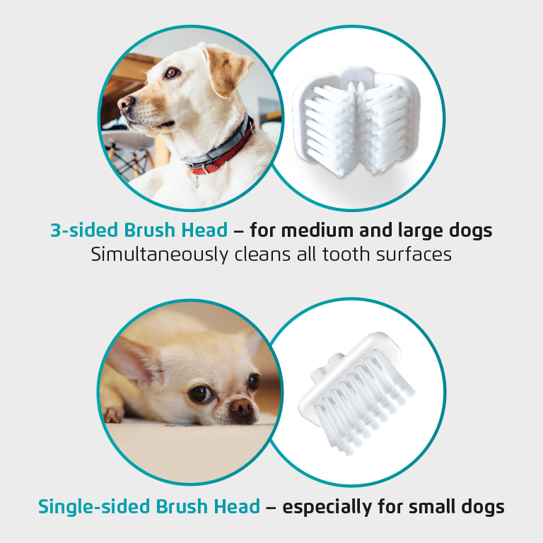 See which Brush Head to use for which size of dog