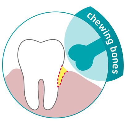 graphics showing that chewing bones do not reach into gum pockets